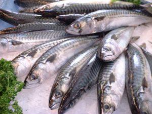 mackerel  サバ