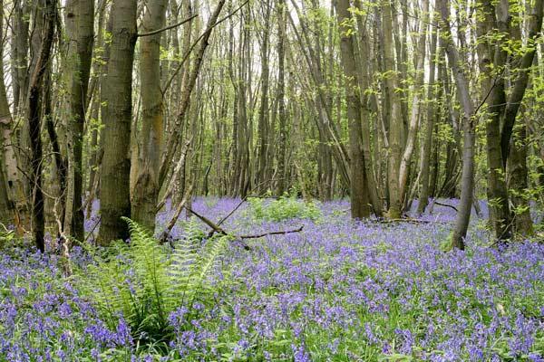 Kent-woods-opti